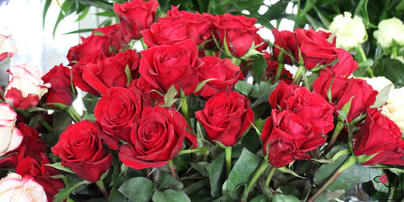 Roses rouges à offrir à la tige