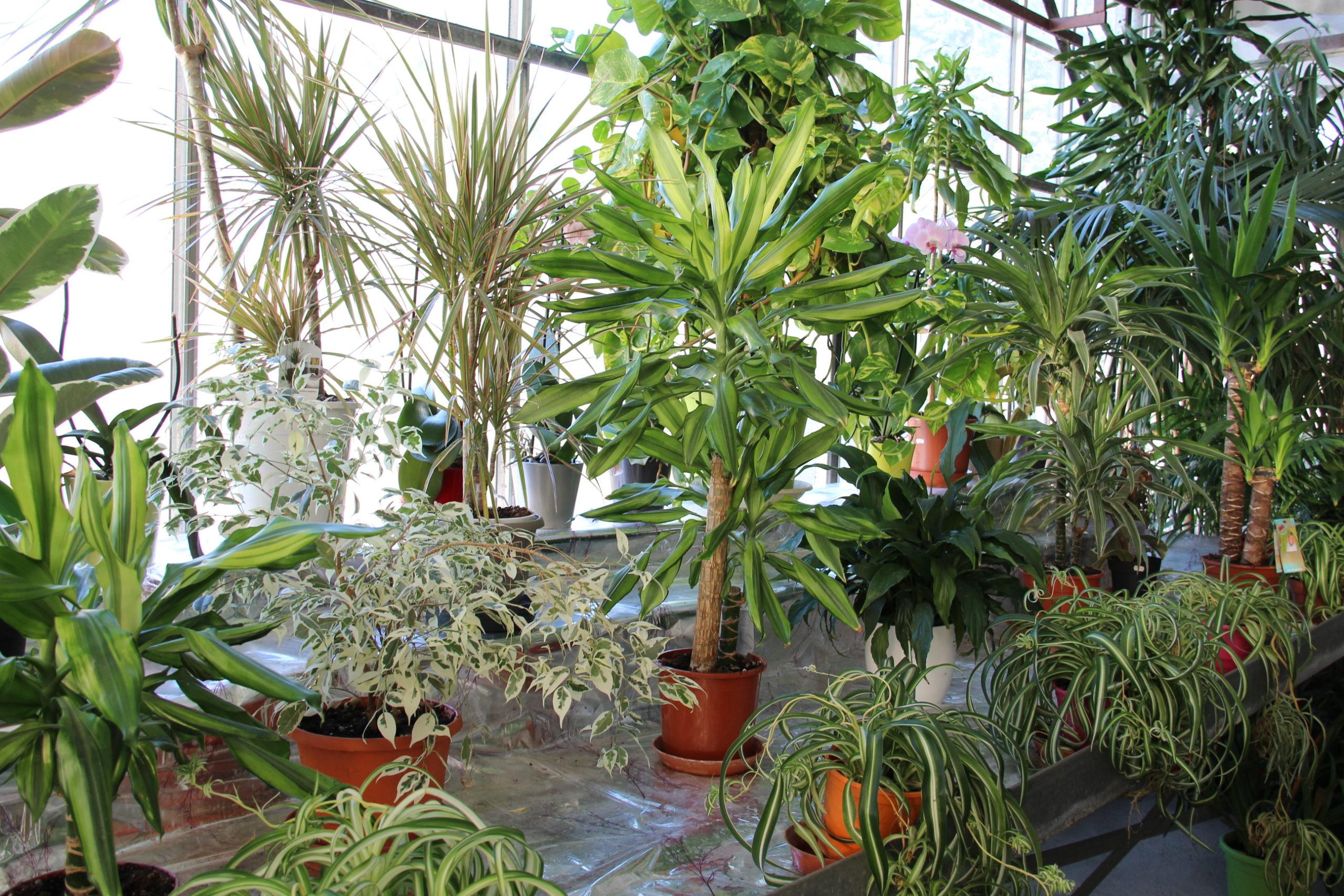 Plantes présentes dans la serre à plantes vertes